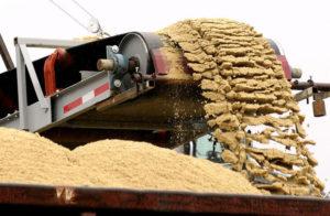 Bulk materials handling conveyors